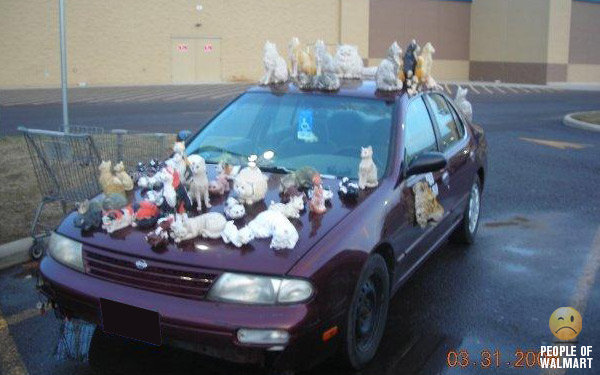 Name:  Mad cat lady car.jpg